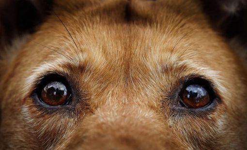 201222121610_dog-15-1280x762