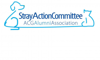stay-action-